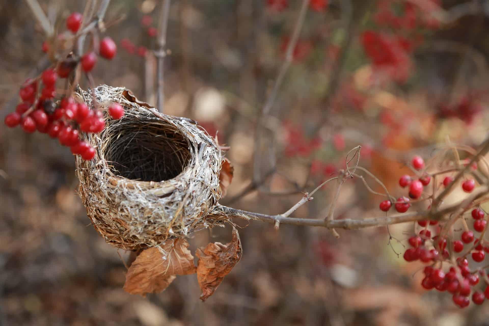 single parent empty nest